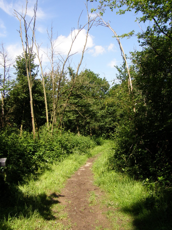 A path on Barn Hill