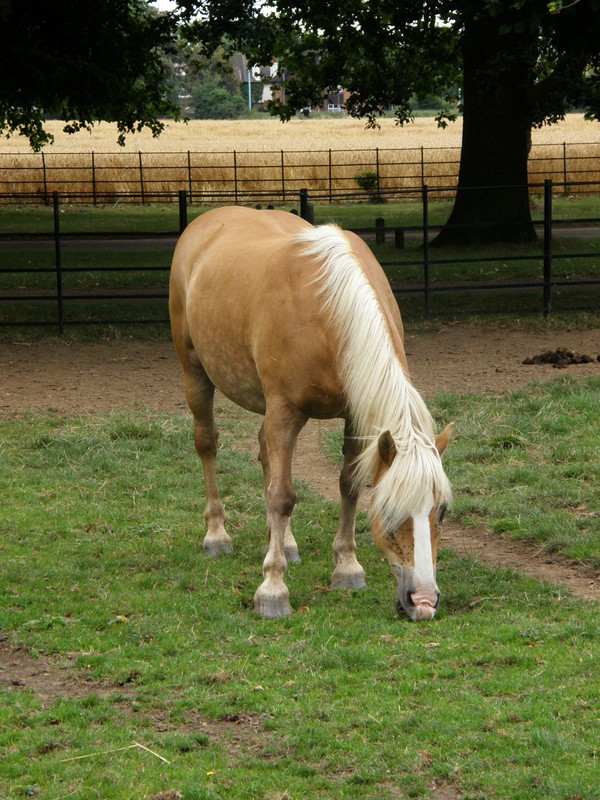A horse in Osterley Park