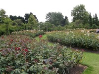 The Rose Garden in Regent's Park