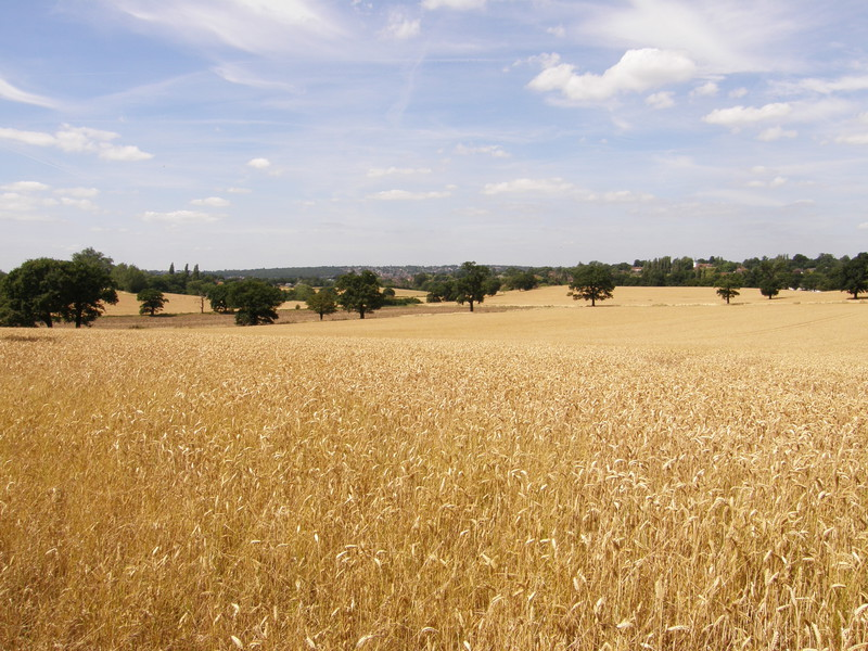 Fields near Grange Hill