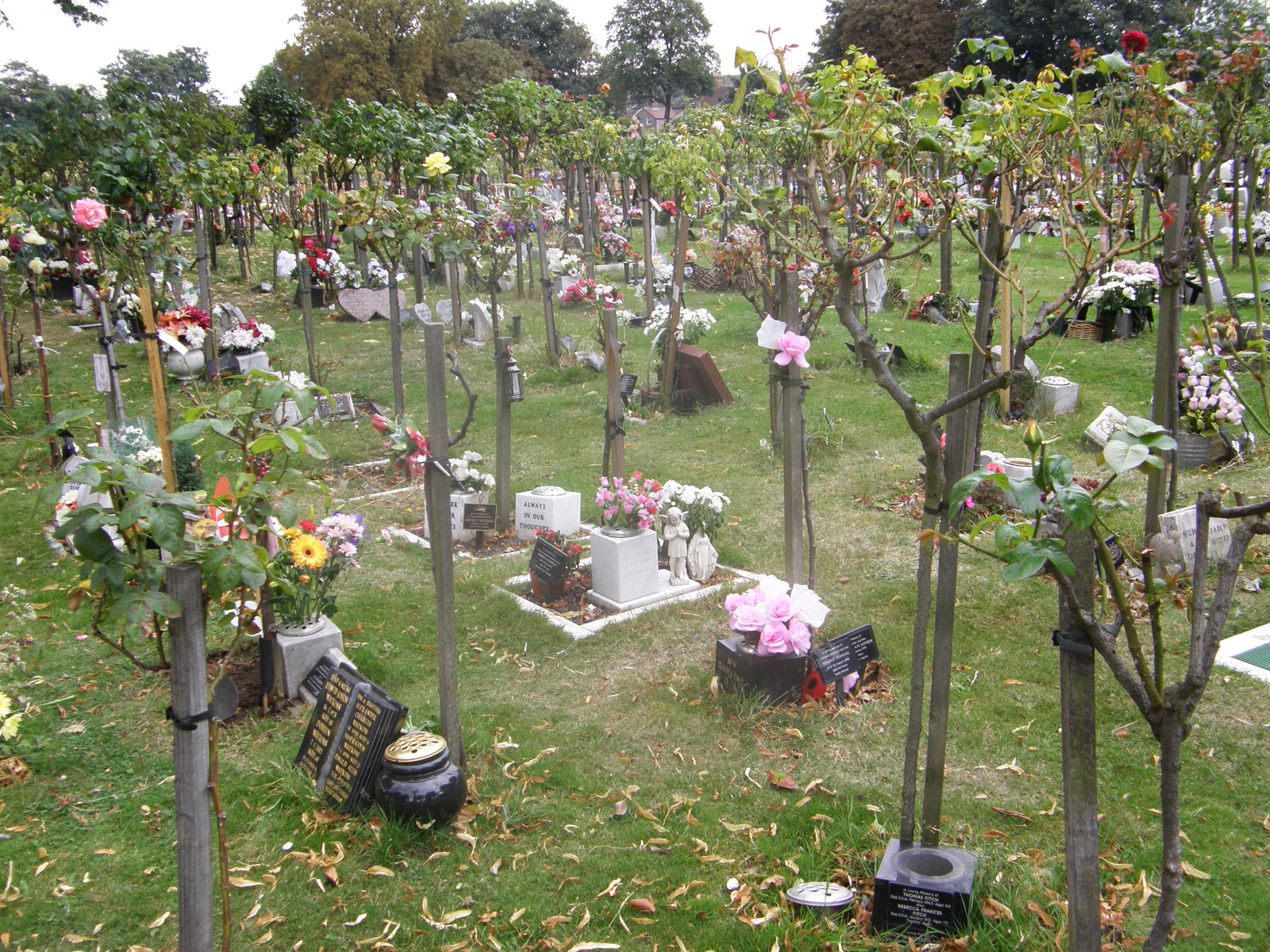 The 'orchard' in East London Cemetery