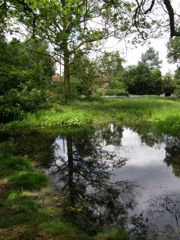 A pond on Chorleywood Common