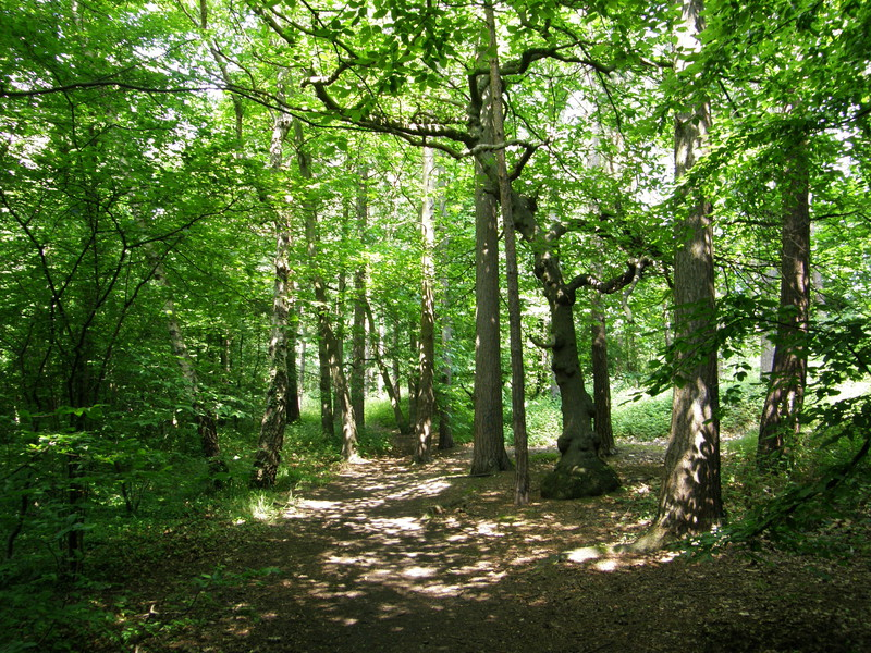 Woodland between the Tube line and Sandy Lodge Golf Course